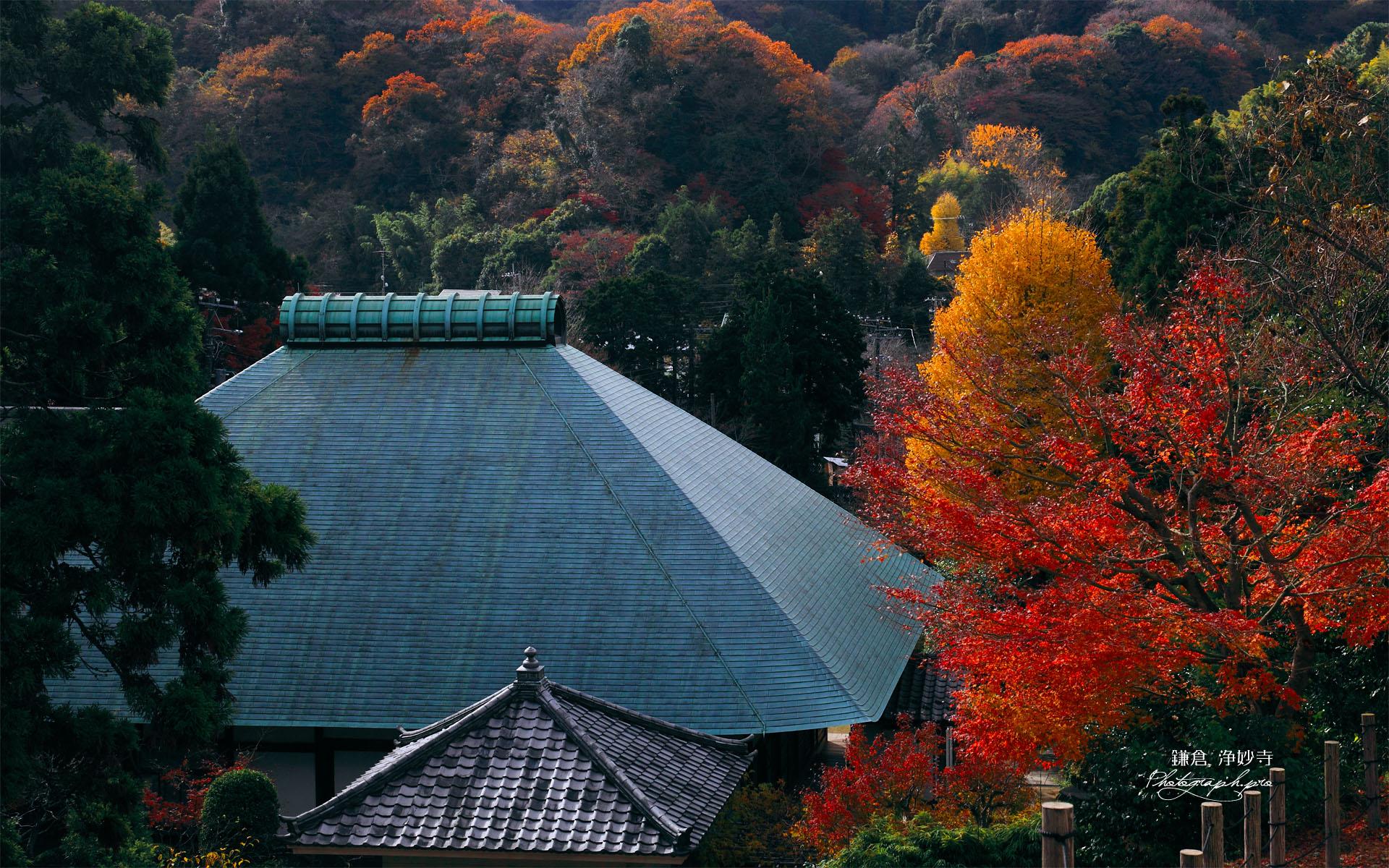 紅葉と浄妙寺本堂