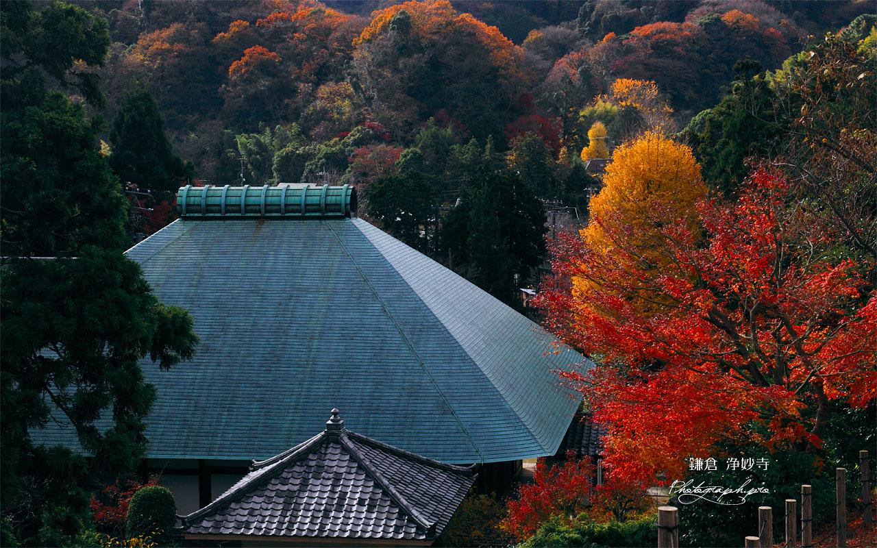 紅葉と浄妙寺本堂 壁紙