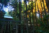 横浜金沢の熊野神社の鳥居と参道