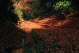 朝夷奈切通 大刀洗川と落葉