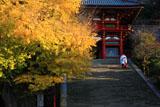 鶴岡八幡宮の大銀杏と禰宜