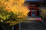 鶴岡八幡宮の大銀杏と巫女