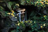 佐助稲荷神社 磐座の散りイチョウ