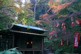 佐助稲荷神社 木漏れ日射す紅葉の拝殿