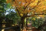 鎌倉葛原岡神社 黄葉の日野俊基の墓