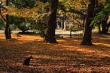 鎌倉葛原岡神社 黄葉とネコ