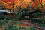 瑞泉寺 紅葉の鶴亀庭