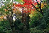 瑞泉寺 錦屏山の三色紅葉