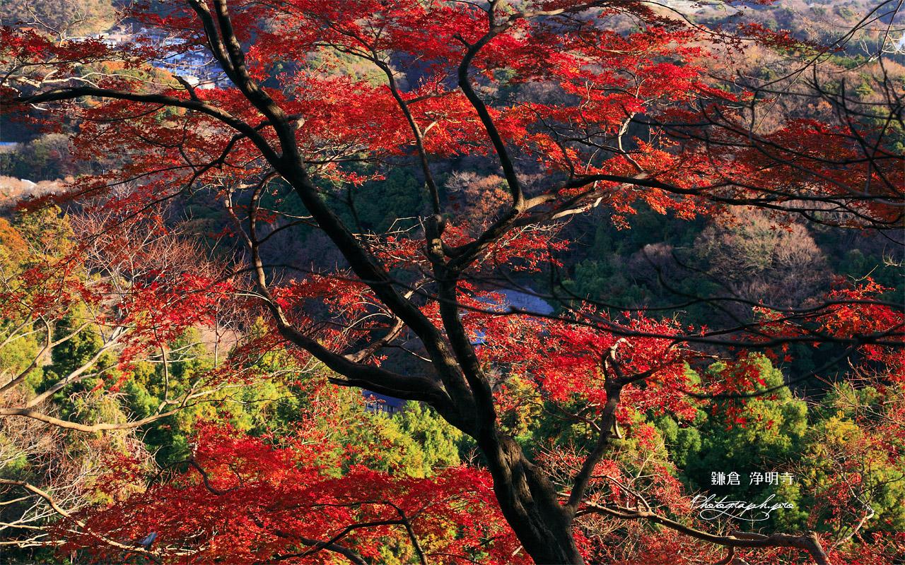 鎌倉 平成巡礼道の名残紅葉 壁紙