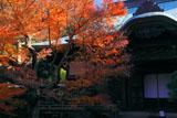 鎌倉妙法寺 紅葉の本堂