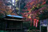 佐助稲荷神社 冬紅葉の拝殿
