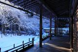 常照皇寺の3代目九重桜