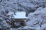 峰定寺の雪の華