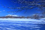 大沼の小島と駒ケ岳