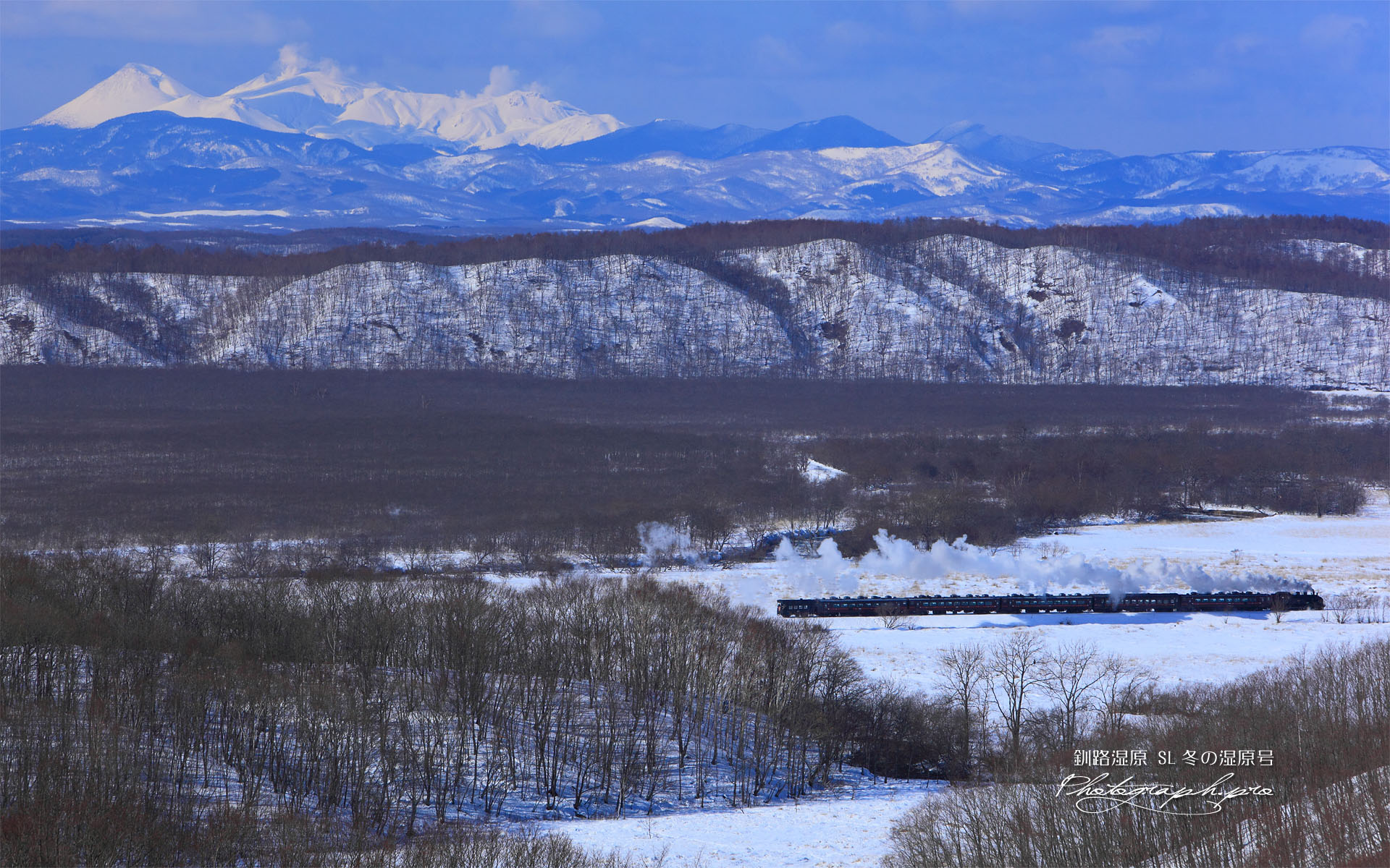 釧路湿原のSL冬の湿原号