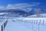 冬のぶどう畑