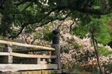 鎌倉妙法寺 高欄と梅