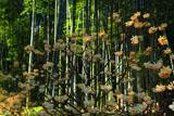 貞宗寺の三椏と竹林