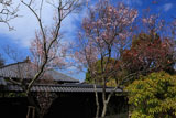 東慶寺 彼岸桜と庫裏