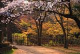 高知城三の丸の桜