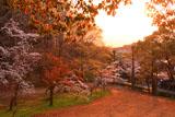 高知城すべり山の桜