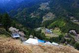山上集落から岡見堂のエドヒガン