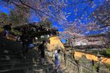 金刀比羅宮1368段の石段