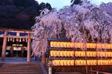 大石神社の大石桜と拝殿
