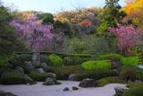 明月院の枝垂れ桜と海棠