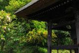 東慶寺 椿と山吹に鐘楼