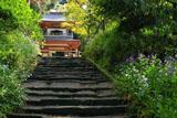 浄智寺のシャガとショカッサイ