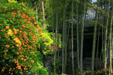 長谷寺のヤマブキと経蔵