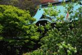 鎌倉妙法寺の利休梅と本堂