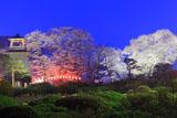 沼田公園の夜桜