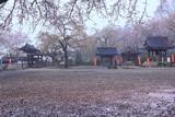 芳賀町 崇真寺の花むしろ