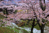 斑雪の白河小峰城