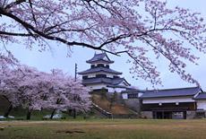 白河小峰城の桜