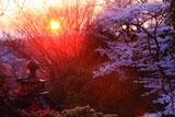夕陽と福聚寺の宝珠