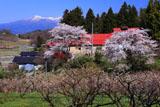 梅林と残雪の安達太良山