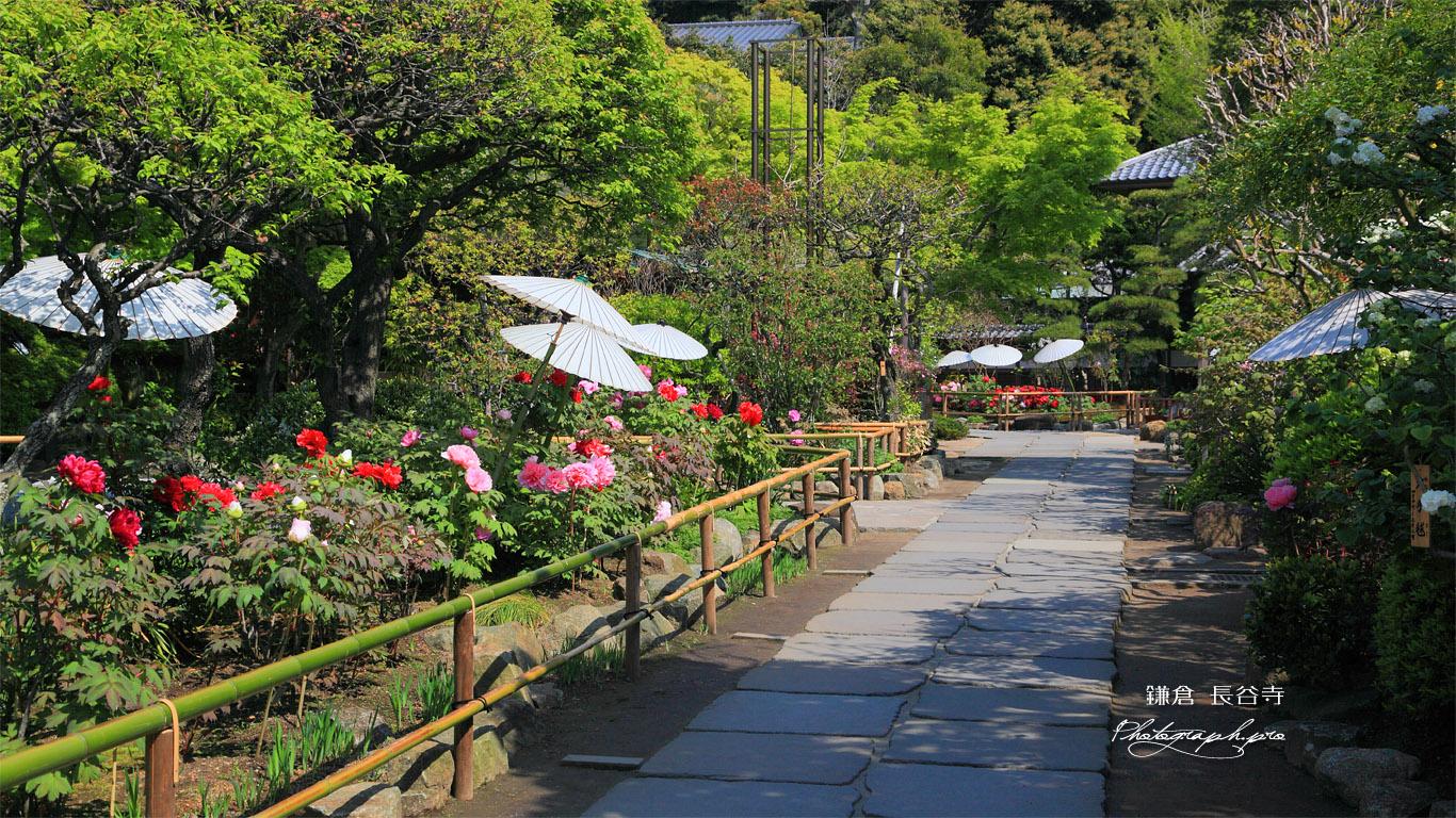 鎌倉長谷寺参道のボタン 壁紙