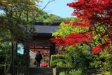 海蔵寺 春紅葉と山門