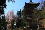 会津美里町 法用寺三重塔と桜