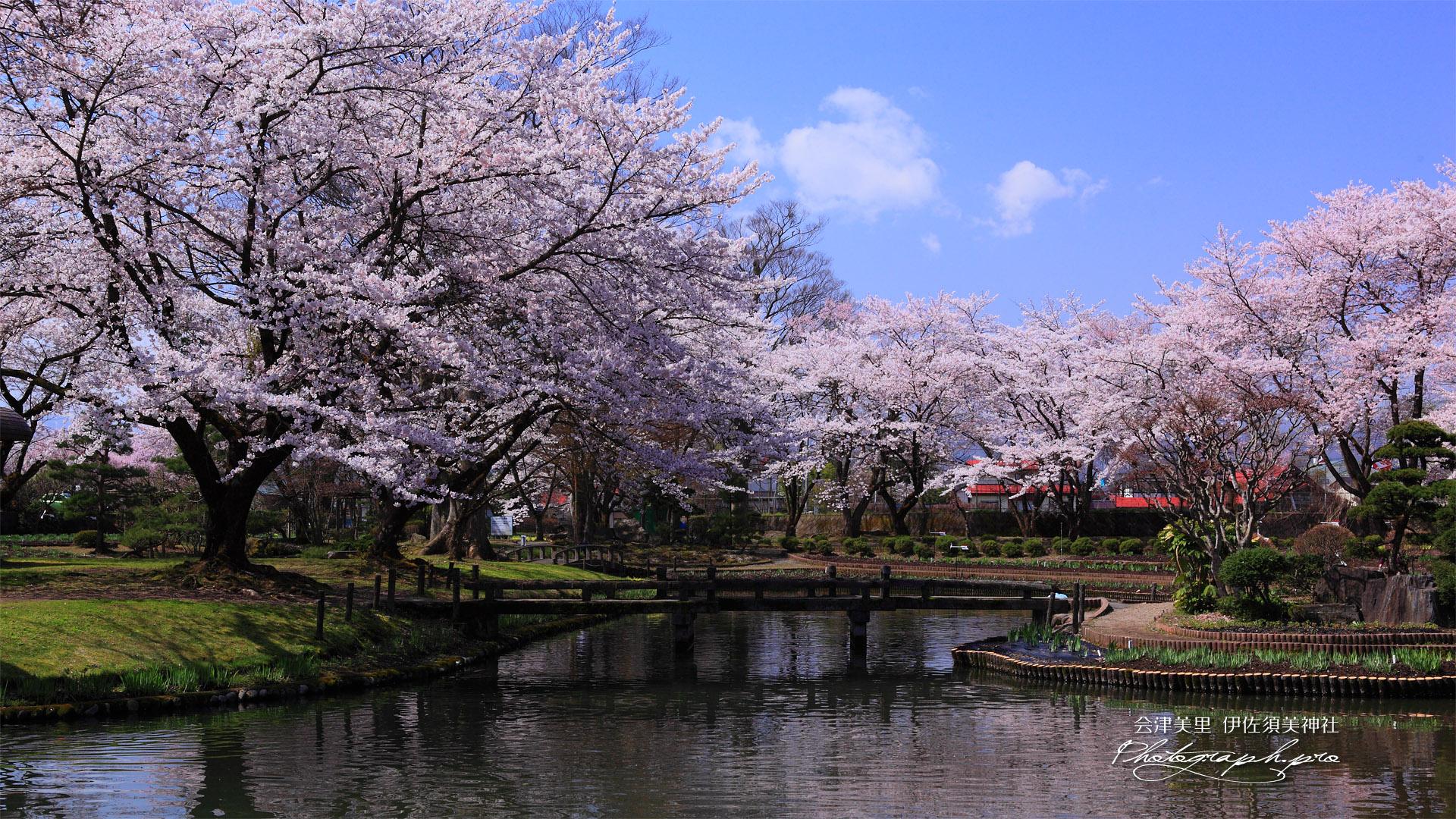 桜の画像 p1_27