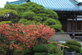 鎌倉九品寺 ボケと本堂