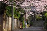 浄妙寺の桜と山門