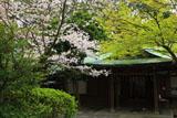 鎌倉宮 桜と社務所