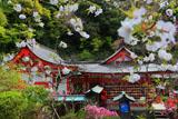 荏柄天神社のサクラと社殿