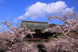 建長寺の桜と三門