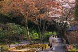 明月院の桜