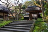円覚寺居士林のヤマザクラ